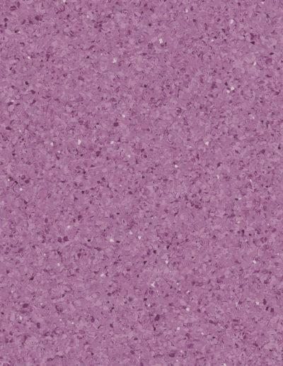 norma-purple-0050
