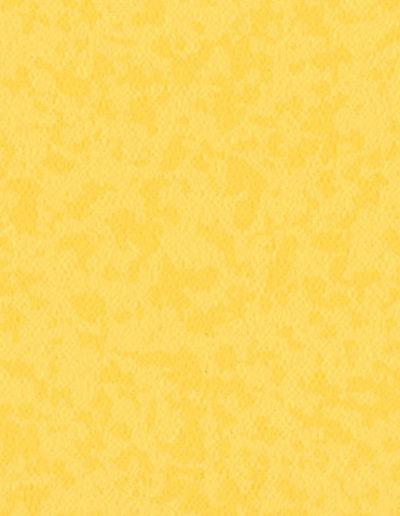 7204 Mimosa